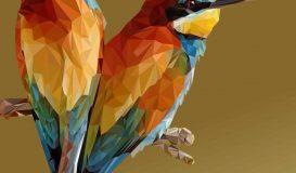 bird ss