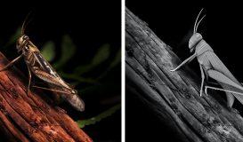 Grasshopper Render